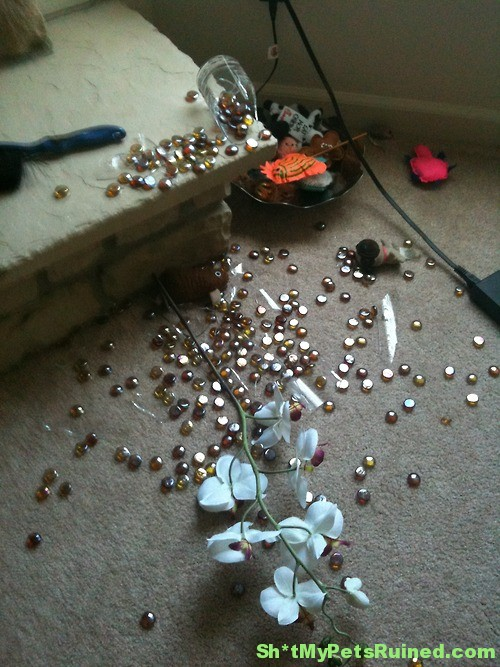 Broken Vase Sht My Pets Ruined