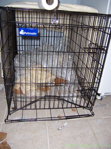 Crate Woes Bark Confessions Of A Dog Trainer