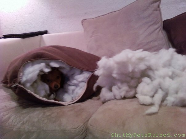 My Dog Ruins Everything Sh T My Pets Ruined